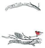 漂流木头和红腹灰雀剪影样式手图画框架  库存例证