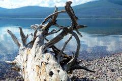 漂流木头在冰川的一个镇静海滩放置 库存图片