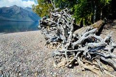 漂流木头在冰川的一个镇静海滩放置 免版税库存照片