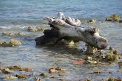 漂流木头在圣佩德罗火山 库存图片
