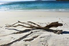 漂流木头在Jervis海湾的海滩场面 库存图片