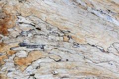漂流木头树桩 免版税图库摄影