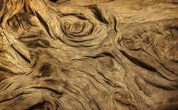 漂流木头树的纹理 库存图片
