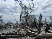 漂流木头树 免版税图库摄影