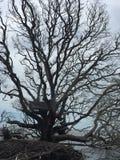 漂流木头树 免版税库存照片