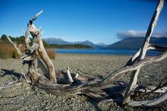 漂流木头框架 库存照片