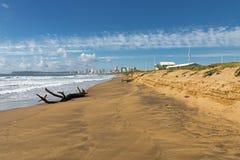 漂流木头注册空的海滩和蓝色多云天空 免版税库存图片
