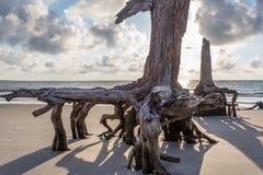 漂流木头海滩, Jekyll海岛乔治亚 免版税库存照片