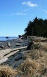 漂流木头海滩  库存图片