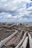 漂流木头看法沿苏必利尔湖的 免版税库存图片