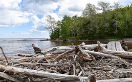 漂流木头看法沿苏必利尔湖的 免版税库存照片