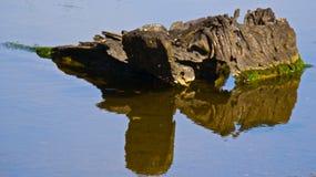 漂流木头 图库摄影
