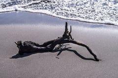 漂流木头 免版税图库摄影