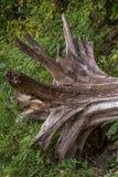 漂流木头 免版税库存图片