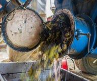 漂浮从卡车的葡萄 免版税库存照片