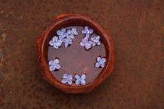 漂浮在一个碗的淡紫色花瓣水 库存照片