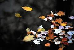 漂浮在一个黑暗的湖的秋天秋天五颜六色的叶子 免版税库存照片