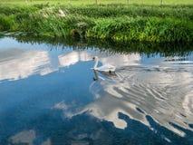 漂浮在云彩9的白色天鹅 库存照片