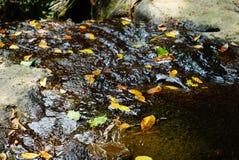 漂浮在当前小河的叶子 库存照片