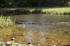 漂浮在有岩石银行的一条清楚的河的漂流木头 库存照片