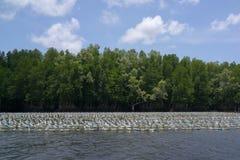 漂浮在河的塑料瓶在美洲红树森林附近 免版税库存图片