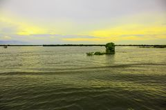 漂浮在河的植物在平安的天空下在晚上 免版税库存照片