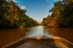 漂浮在河Kinabatangan和密集的热带森林沙巴,婆罗洲,马来西亚的木小船 免版税库存图片