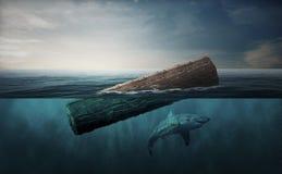 漂浮在海洋和鲨鱼的树干 免版税图库摄影