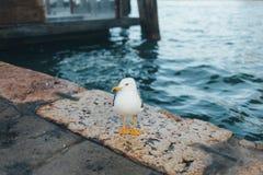 漂浮在海的一只鸥 图库摄影