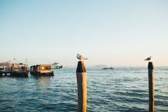 漂浮在海的一只鸥 免版税库存照片