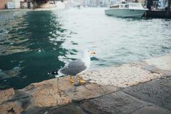 漂浮在海的一只鸥 库存图片