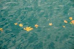 漂浮在海的秋叶 免版税库存图片