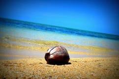 漂浮在海洋的椰子 库存照片