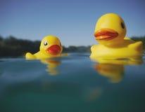 漂浮在湖的两只橡胶鸭子 库存图片