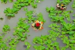 漂浮在百合池塘的新娘花束 库存照片