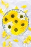 漂浮在碗,温泉背景的白色和黄色花 免版税库存照片
