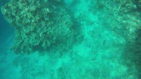 漂浮在礁石中的鱼群  股票视频