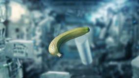 漂浮在航天飞机里面的香蕉和对象 向量例证