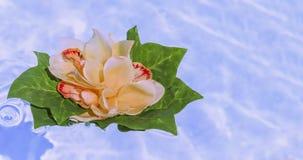 漂浮在水中的兰花 免版税库存照片