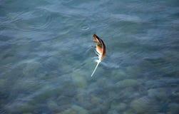 漂浮在水中的唯一羽毛 免版税库存图片