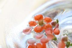 漂浮在水中的柑橘花 免版税库存照片