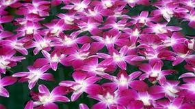 漂浮在水摘要温泉放松的紫色兰花 库存图片