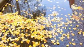 漂浮在黑暗的水,特写镜头中的下落的叶子 库存图片
