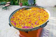 漂浮在水池的热带花蕾 免版税库存图片