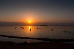 漂浮在死海在黎明,以色列的人们 库存图片