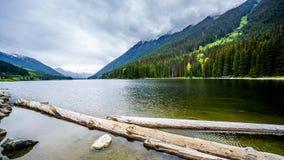 漂浮在Duffy湖的日志 库存图片