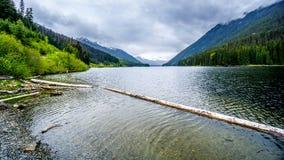 漂浮在Duffy湖的日志 图库摄影
