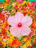 漂浮在Songkran festiva的碗的五颜六色的花瓣 库存照片