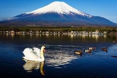 漂浮在Yamanaka湖有富士山视图,山梨,日本的白色天鹅 免版税库存照片