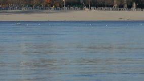 漂浮多瑙河表面,诺维萨德,塞尔维亚上的海鸥群 股票视频